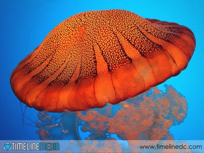 Monterey Bay Aquarium - ©TimeLine Media